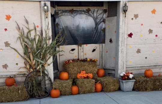 Main Pumpkins
